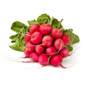 Radis rose/rouge botte -...