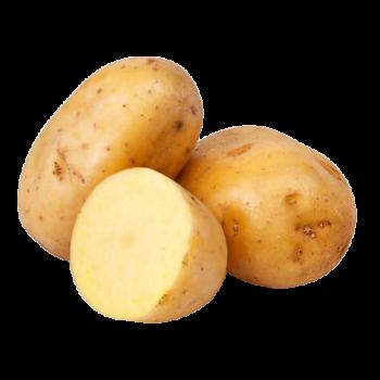 Pomme de terre - France